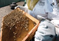 garcelon david beekeeper