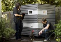 Modern backyard chicken coop