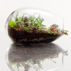 Terrariums by Botany Factory