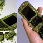 The Grass Phone