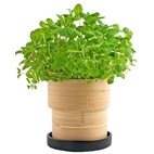 Organic Basil Bamboo Grow Pot