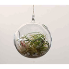 Hanging Terrarium with Tillandsia Planting Kit