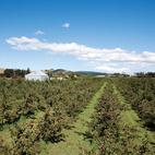 Orchard Jam