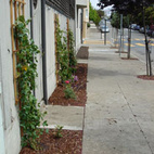 Sidewalk Gardens in San Francisco