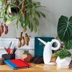 5 Desktop Gardening Accessories