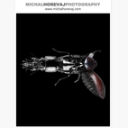 Promo Daily: Michal Horevaj