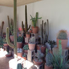 All the Cacti You Could Ever Need at a Shop in Los Angeles