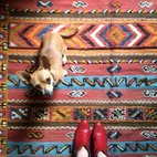 Photo of the Week: Beautifully Textured Moroccan Rug and a Puppy