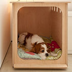 5 Modern Spaces Gone to the Dogs