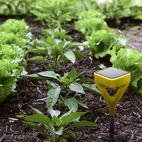 A Smart Tech Tool That Will Help Novice Gardeners Kill Fewer Plants