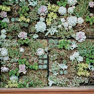 Vertical wall of succulents in a Menlo Park garden