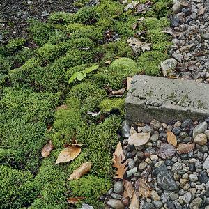 101 landscape supplant your lawn thumbnail