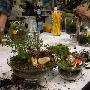 Glass Jar Terrariums Workshop thumbnail