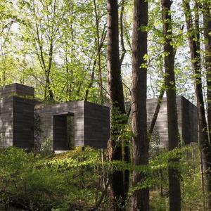 woodstock trees thumb