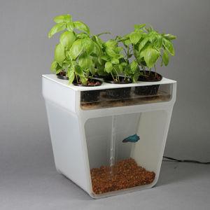 Aquaponics fishtank garden kickstarter