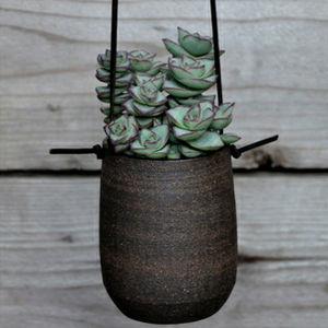 succulent hanging planter