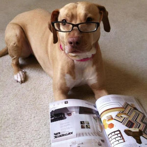 dogwithglassesreadingmagazine