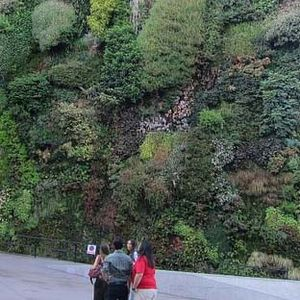 madrid living wall  1