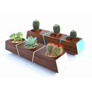indoor planted made from walnut wood painted blue and white