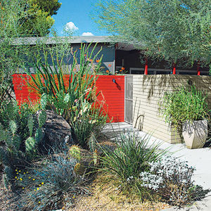 climate control southwest yucca brittlebush prickly pear landscaping garden